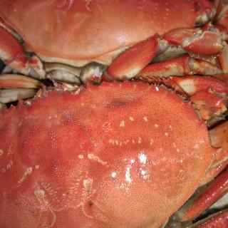 Fresh 2lb Ocean Crab